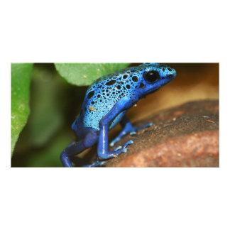 rana azul de la flecha del veneno tarjeta fotográfica