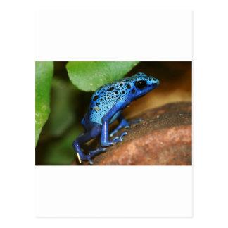 rana azul de la flecha del veneno postales