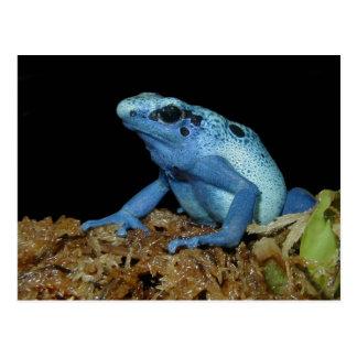 Rana azul del dardo (azureus) de Dendrobates .jpg Postal