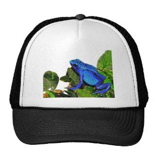 Rana azul del dardo del veneno gorros