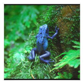 Rana azul del dardo del veneno invitacion personal