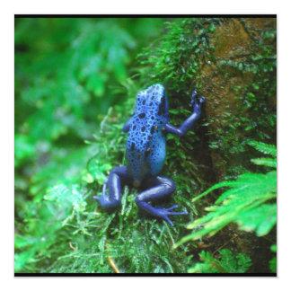 Rana azul del dardo del veneno