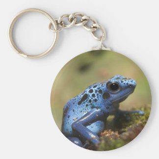 Rana azul del dardo del veneno llavero redondo tipo pin