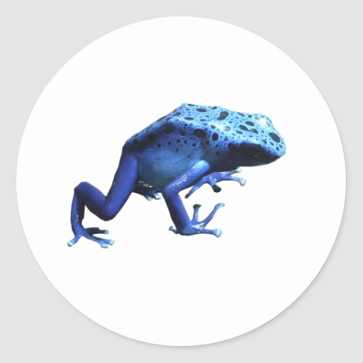 Rana azul del dardo del veneno pegatina redonda