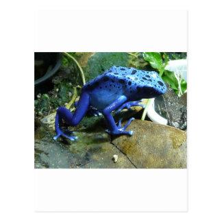 Rana azul del dardo del veneno postal