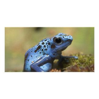 Rana azul del dardo del veneno tarjeta fotografica