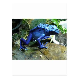 Rana azul del dardo del veneno tarjetas postales