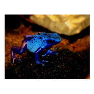 Rana azul del veneno tarjetas postales