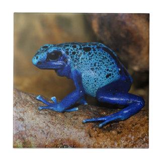 Rana azul Dendrobates Azureus del dardo del veneno Tejas Cerámicas