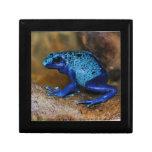 Rana azul Dendrobates Azureus del dardo del veneno Cajas De Recuerdo