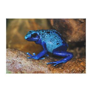 Rana azul Dendrobates Azureus del dardo del veneno Impresion En Lona