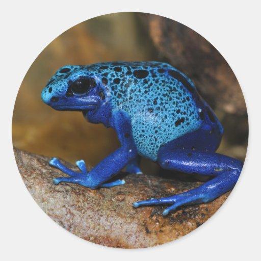 Rana azul Dendrobates Azureus del dardo del veneno Etiqueta Redonda