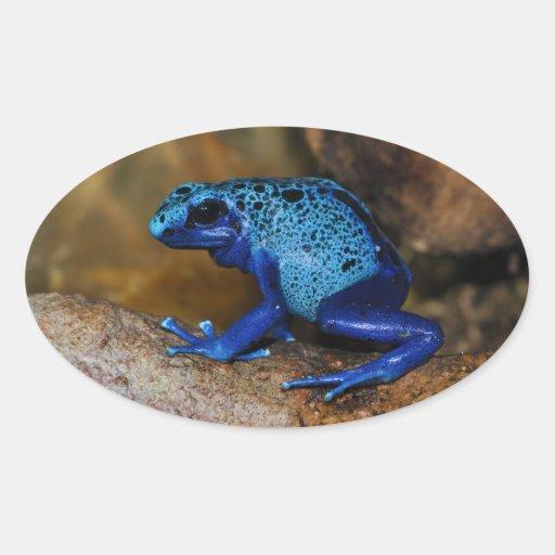 Rana azul Dendrobates Azureus del dardo del veneno Calcomanía De Oval Personalizadas
