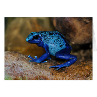 Rana azul Dendrobates Azureus del dardo del veneno Felicitacion