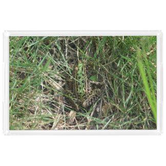 Rana, bandeja de la vanidad bandeja rectangular