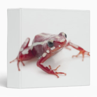 rana Blanco-rayada 2 del dardo del veneno