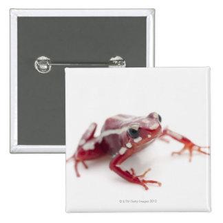 rana Blanco-rayada 2 del dardo del veneno Pin Cuadrada 5 Cm