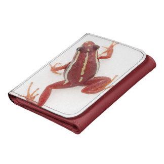 rana Blanco-rayada del dardo del veneno