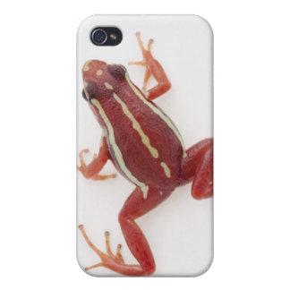 rana Blanco-rayada del dardo del veneno iPhone 4 Fundas