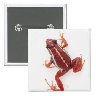 rana Blanco-rayada del dardo del veneno Pin Cuadrada 5 Cm