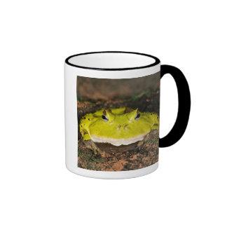 Rana brasileña del cuerno, cornuta de Ceratophrys, Taza De Dos Colores