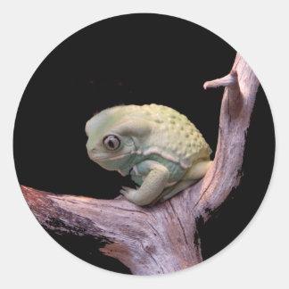 Rana cerosa del mono pegatina redonda