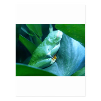rana cerosa del mono tarjeta postal