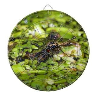 Rana comestible Pelophylax kilolitro. Esculentus