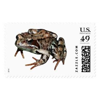 Rana común sello postal