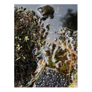 Rana con la postal de la freza de la rana