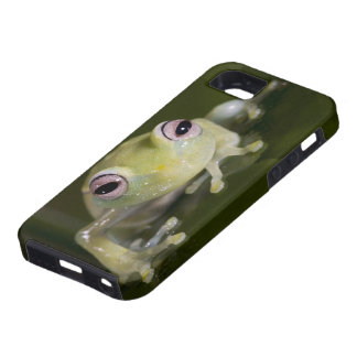 Rana de cristal africana, viridiflavus de funda para iPhone 5 tough