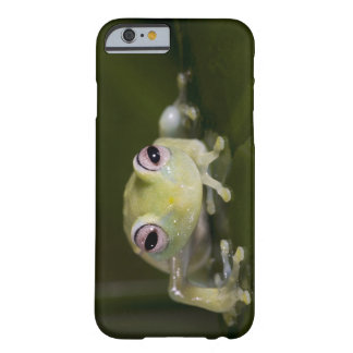 Rana de cristal africana, viridiflavus de funda para iPhone 6 barely there
