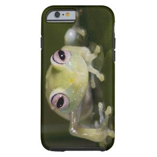 Rana de cristal africana, viridiflavus de funda para iPhone 6 tough