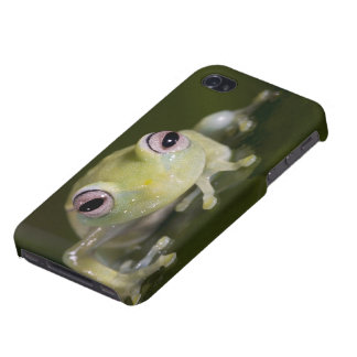 Rana de cristal africana, viridiflavus de iPhone 4 fundas