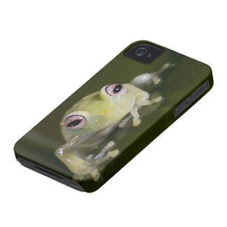 Rana de cristal africana, viridiflavus de iPhone 4 protector