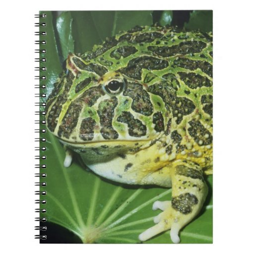 Rana de cuernos adornada, (ornata de Ceratophrys), Libreta