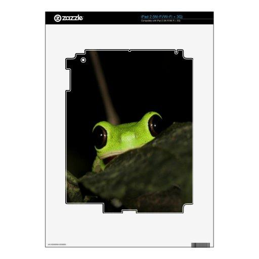 Rana de la hoja del Lemur iPad 2 Skin