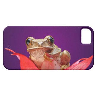 Rana de lámina veteada linda África Deep Purple Funda Para iPhone SE/5/5s