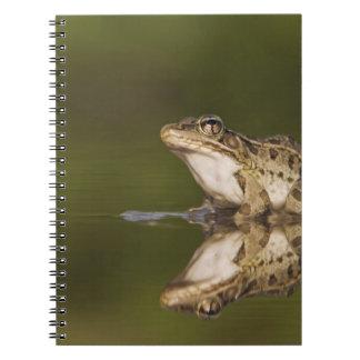 Rana de leopardo del Rio Grande, berlandieri del R Note Book