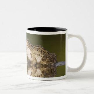 Rana de leopardo del Rio Grande, berlandieri del R Tazas