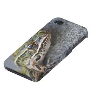 Rana de leopardo septentrional Ver-por la isla