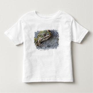 Rana de leopardo septentrional, Ver-por la isla, Camisas