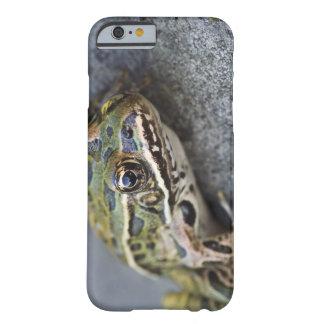 Rana de leopardo septentrional, Ver-por la isla, Funda De iPhone 6 Barely There