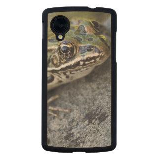 Rana de leopardo septentrional, Ver-por la isla, Funda De Nexus 5 Carved® Slim De Arce