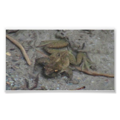 Rana de los animales acuáticos/de las plantas de I Fotografia