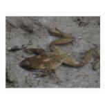 Rana de los animales acuáticos/de las plantas de postal