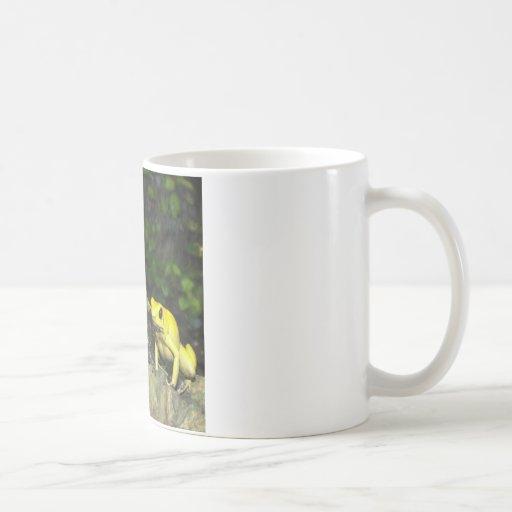 Rana de oro del dardo taza de café