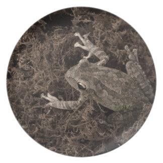 rana dejada en tono de la sepia del musgo plato