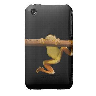 Rana del pantano (Limnonectes Leytensis) Funda Bareyly There Para iPhone 3 De Case-Mate