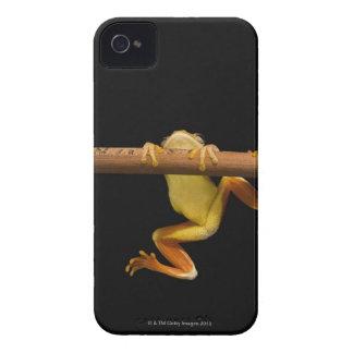 Rana del pantano (Limnonectes Leytensis) Funda Para iPhone 4